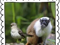"""SZ-Kolumne """"Bester Dinge"""": Tierisch ist nicht gleich tierisch"""