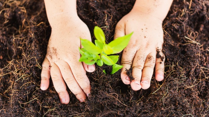 Top view Hand of Asian cute little child boy planting young tree on black soil Copyright: xSorapopx Panthermedia28313028