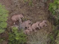 Artenschutz: Elefantenherde zieht seit Monaten durch Südchina