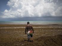 """Algenpest im Atlantik: Die braune Flut, die zur """"neuen Normalität"""" werden könnte"""