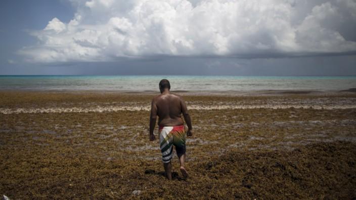 A man walks through Sargassum algae at Gaviota Azul beach in Cancun