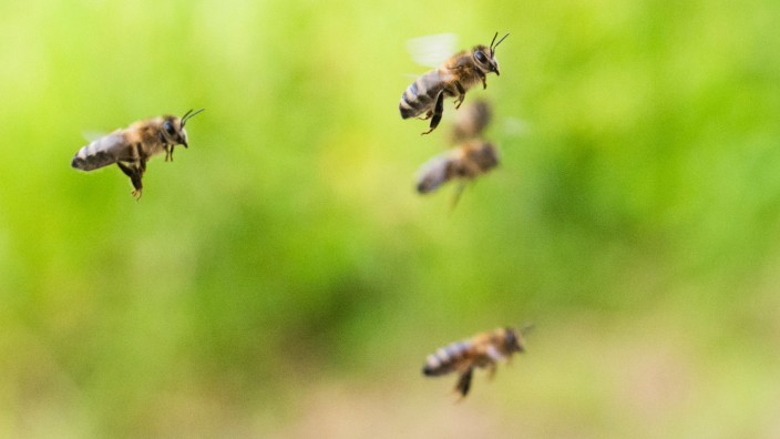 Bienen in der EU weiter in Gefahr