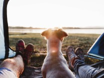 Legs of friends with dog relaxing in tent during sunset model released Symbolfoto property released EBBF02203