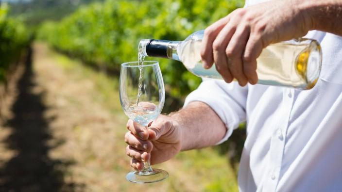 Mid section of vintner examining wine model released Symbolfoto property released PUBLICATIONxINx