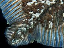 Zoologie: Hundert Jahre Langsamkeit