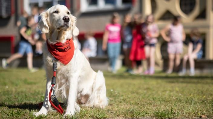 Schulhund im Einsatz an Thüringer Schule