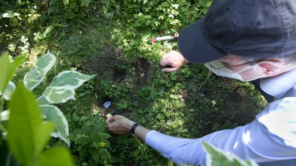 Mit Teebeuteln den Boden erforschen
