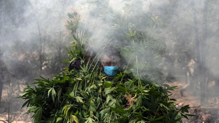 Drogen in Mexiko: Mexikanische Soldaten brennen eine illegale Marihuana-Plantage in Mexiko nieder.