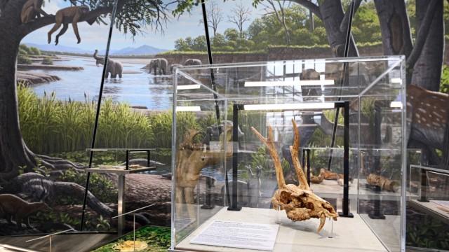 Molassic Park Ausstellung