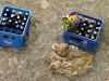 Bierkästen in der Isar, 2021