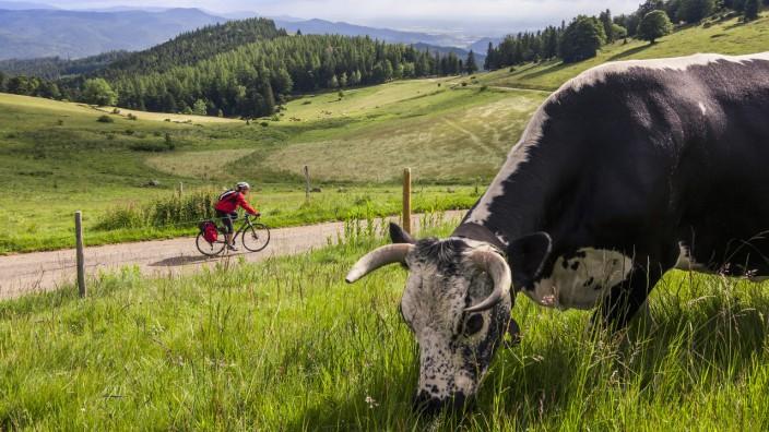Online nur zulässig, wenn das Bild auch in Print erscheint!!!  Bikepacking in the High Black Forest