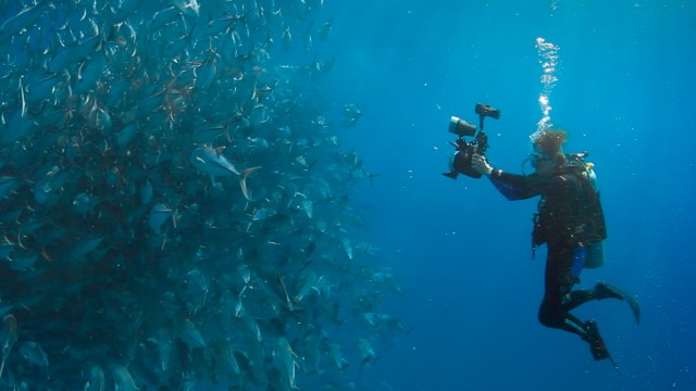 """Fünf Favoriten der Woche: Die Meeresbiologin Sylvia Earle in einer Szene aus """"Wer wir waren""""."""