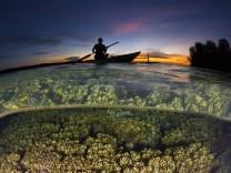 Erderwärmung: Das Schicksal der Korallen entscheidet sich jetzt