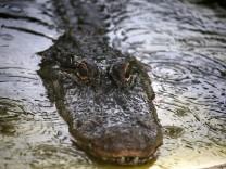 USA: Mann in Florida stürzt von Rad und wird von Alligator attackiert