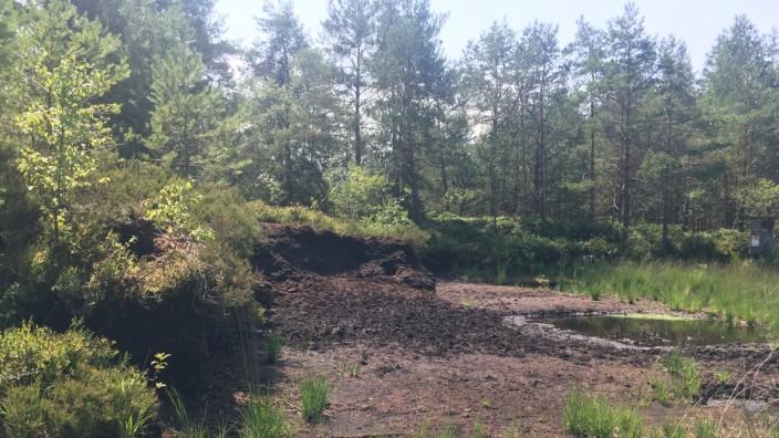 SZ-Serie: Urlaub daheim: Die Nicklheimer Filze sind ein wiedervernässtes renaturiertes Hochmoor bei Raubling.