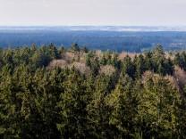 Ebersberger Forst - über den Wipfeln