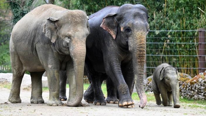München: Die Zahl der Besucher ist im Tierpark um 75 Prozent zurückgegangen.