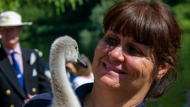 Großbritannien: Wendy Hermon betreibt eine Schwanenstation in London und kennt die Schwäne besser als irgendjemand sonst hier.