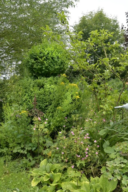 Naturschutz in Erding: Ein Buchsbaum, der im Garten von Brigitte Murla steht.