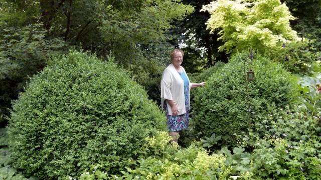 Naturschutz in Erding: Brigitte Murla, Vorsitzende des Kreisverband Erding für Gartenbau und Landschaftspflege, hat heuer noch keinen einzigen Zünsler in ihren 50 Buchsbäumen entdeckt: