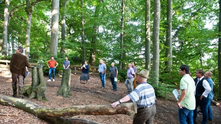 Neue Bäume: Wie geht es dem Ebersberger Stadtwald rund um den Aussichtsturm? Sehr gut - das erfahren Politiker der Kreisstadt bei einem Ausflug ins Grüne. Allerdings muss einiges dafür getan werden, dass das auch so bleibt.