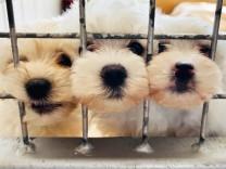Corona und Tiere: Gekauft, gestreichelt, entsorgt