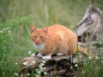 """Brighton: Fünf Jahre Haft für """"Katzenmörder"""""""