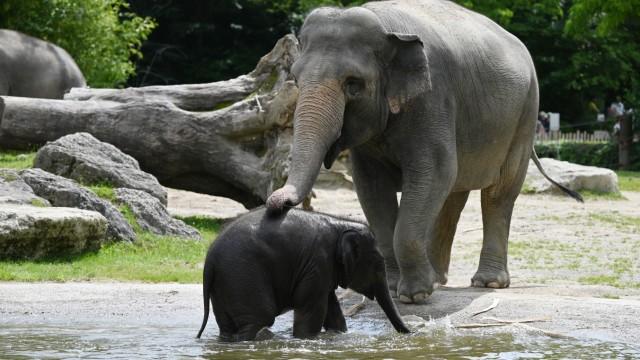 München: Es gibt viel zu entdecken: Von Elefantenbabys, die im Wasser plantschen...