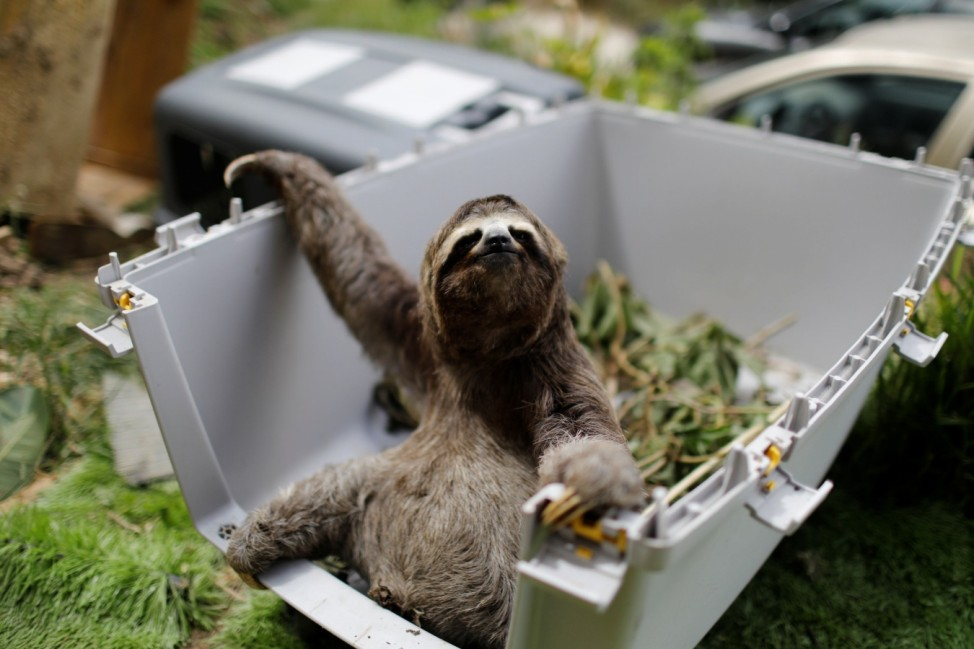 Shelter for sloths in San Antonio