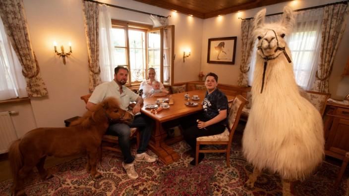 Farm der Zirkus-Tiere: Und das Lama frühstückt mit: Blick ins Wohnzimmer der Direktorenfamilie Lacey, das allerdings nicht öffentlich zugänglich ist.