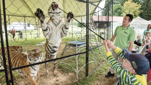 Farm der Zirkus-Tiere: Zu den Attraktionen des Rundgangs über die Weßlinger Farm gehört, dass auch kleine Besucher die Tiger füttern dürfen - mit Abstand und Stange.