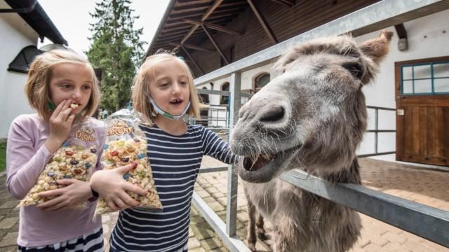 Farm der Zirkus-Tiere: Esel Bim ist mit 38 Jahren ein wahres Grautier und lässt sich geduldig von Linea und Kalea Lingg streicheln.