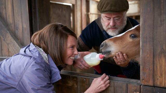 """""""Dream Horse"""" im Kino: Toni Collette und Owen Teale züchten ihr """"Dream Horse""""."""