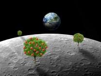 Raumfahrtforschung: Gewächshäuser auf dem Mond?