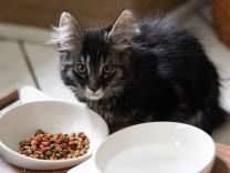 Verhaltensbiologie: Wie faul sind Hauskatzen?