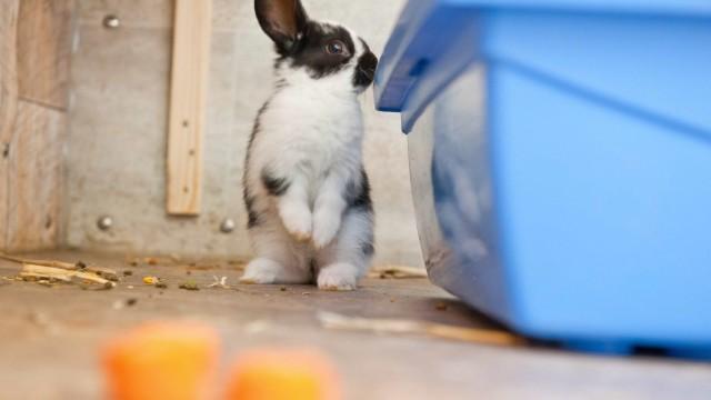 Tierschutz in Ebersberg: 24 Tiere wurden auf einem Hof im Landkreis wegen schlechter Haltung beschlagnahmt, darunter auch mehrere kleine Kaninchen.