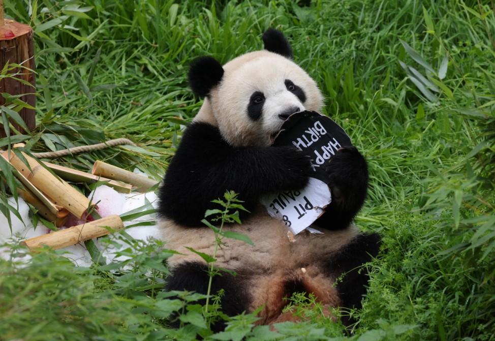 Berlin Zoo Celebrates Panda Twins Second Birthday