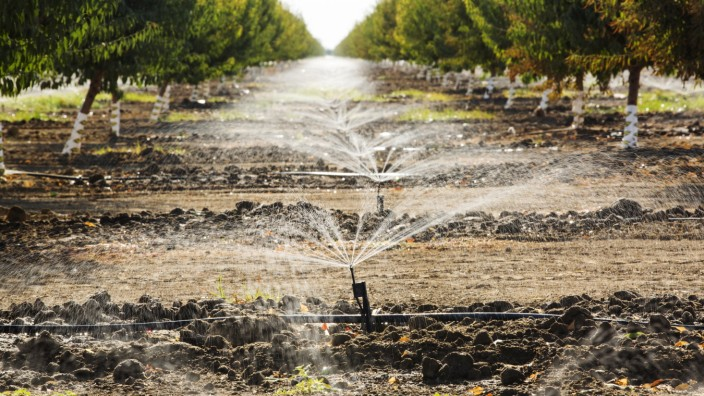 Almod tree being irrigated in California s Central Valley, which is in the grip of a four year long drought. The catastr