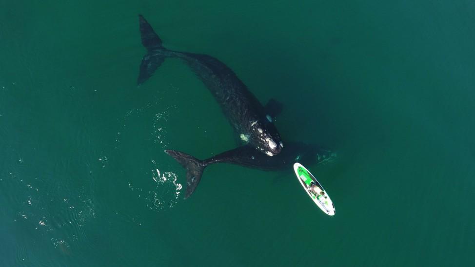 Walen in Argentinien
