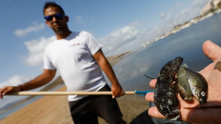 Tote Fische im spanischen Mar Menor