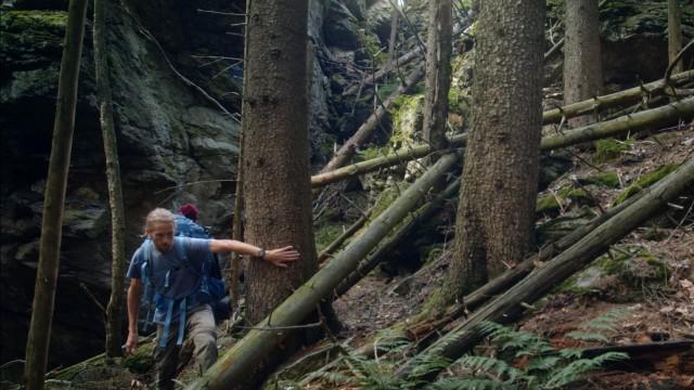 "Festival: Szene aus Lisa Eders Film ""Der wilde Wald""."