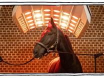 """SZ-Kolumne """"Bester Dinge"""": Geht ein Pferd ins Solarium"""