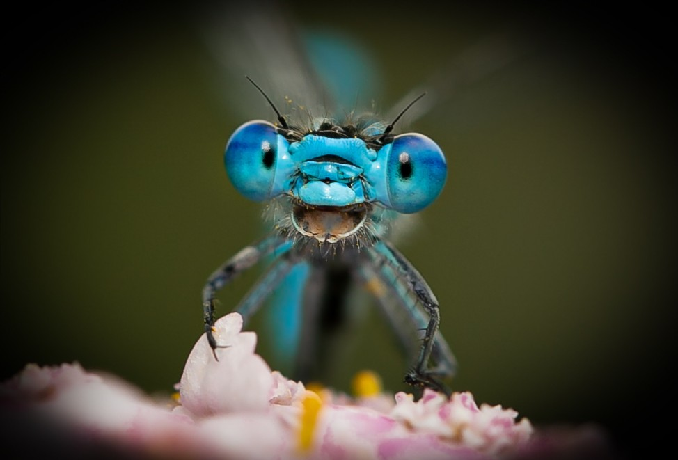 Title: Don't worry. Be happy! Description: A Dragonfly early in the morning on a flower looks into my camera and it seems as if it laughing. The year 2020/2021 was very hard for everybody because of Corona. But when you go outside and watch carefully the