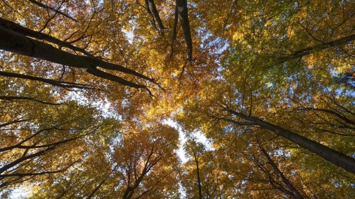 Oberfranken: Wald mit Buchen im Herbst