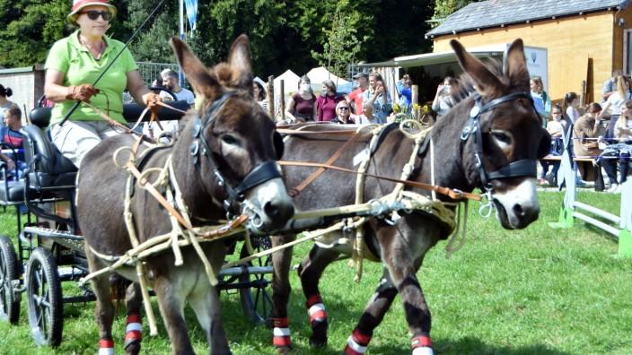 Türkenfeld: Der Eselmarkt am vergangenen Wochenende konnte ohne Maske besucht werden. Das gilt auch für die Veranstaltungen an diesem Wochenende auf dem Steingassenberg in Türkenfeld. Allerdings müssen alle Besucher die 3G-Regel befolgen.