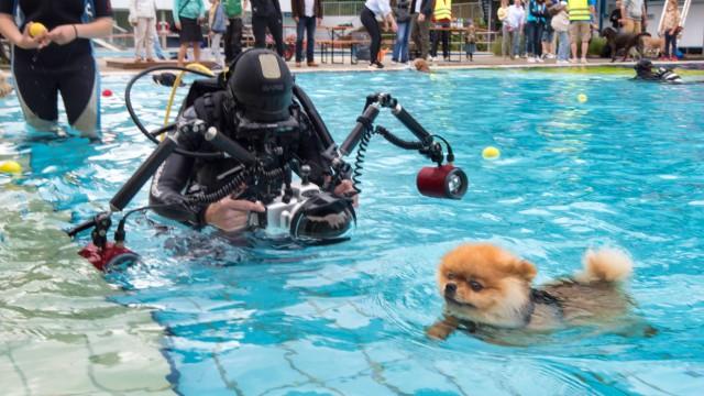 Hundeschwimmen: Alex Weinberger hält die Tiere mit Spezialkamera und Taucherausrüstung fest.