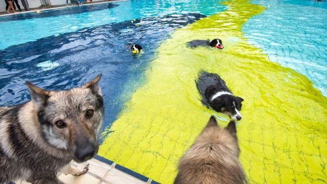 Hundeschwimmen: Im Gautinger Sommerbad geht's tierisch zu.