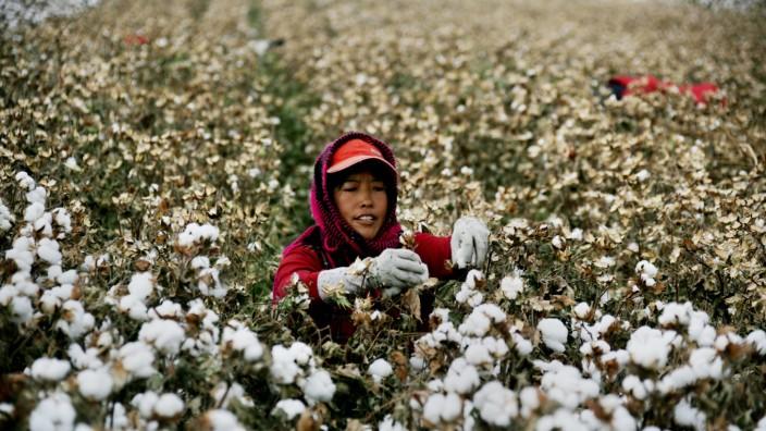 worker picking cotton