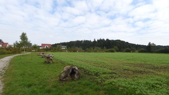 Haimhausen: Hier auf der Ackerfläche am Ende der Mühlenstraße könnte einmal Ottershausens Bürgerhaus stehen. Die Mehrheit im Ort ist jedenfalls dafür.