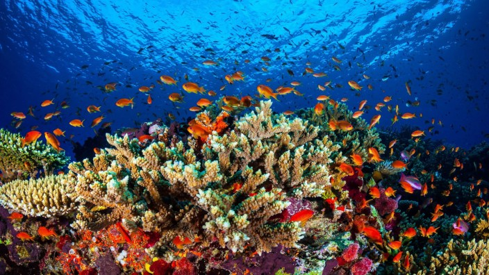 Lebensraum Korallenriff - Great Barrier Reef